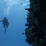 dive hurghada-diving-scuba-coral-diver-red sea