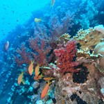 dive hurghada-diving-dive-diver-coral-wreck-abu nuhas-coral-fish-photo-underwater-red sea-hurghada