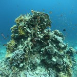 reef in hurghada _dive in read sea