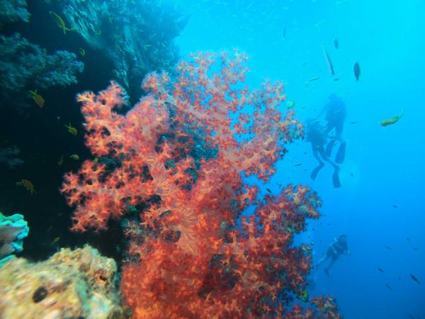 Things to do Hurghada – Egypt | Dive Hurghada Blog tips