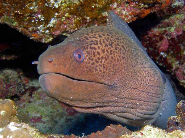 Red Sea Eels Dive Hurghada Diving Centre